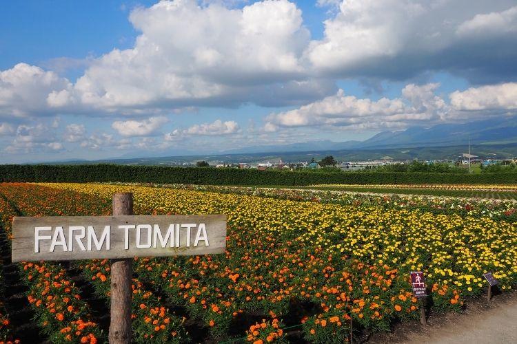 北海道旅行記 ファーム富田