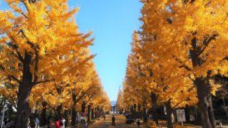 慶応日吉キャンパスの銀杏並木がキレイすぎたので紹介するよー!